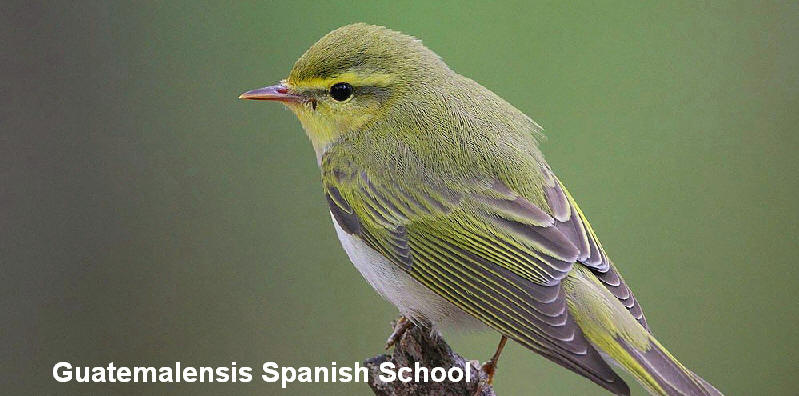 Bird-watchers are welcomed into our program. Flickr Rainbirder Wood Warbler.