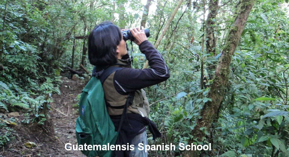 Into the Guatemalensis Spanish School program you will have many opportunities of birdwatching and birding.