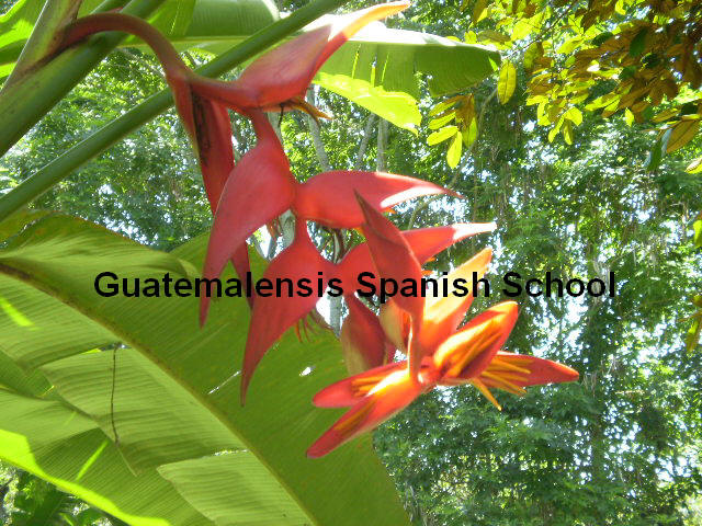 Guatemala is rich in flora, its natural diversity makes it unique in the world.