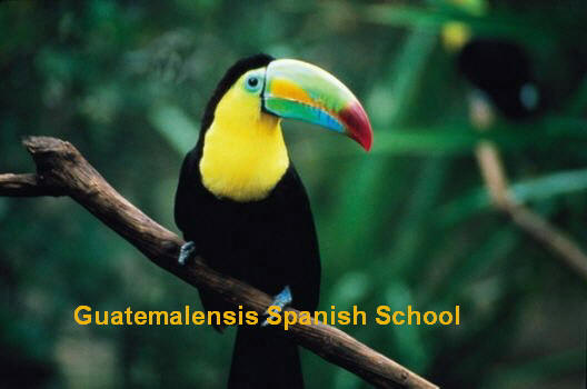 Guatemala is rich in fauna, you can see many different species.